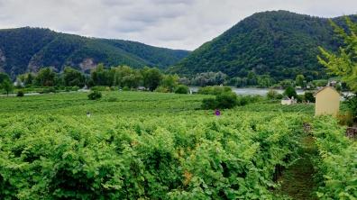 C1_Wachau-Danube-10_resize